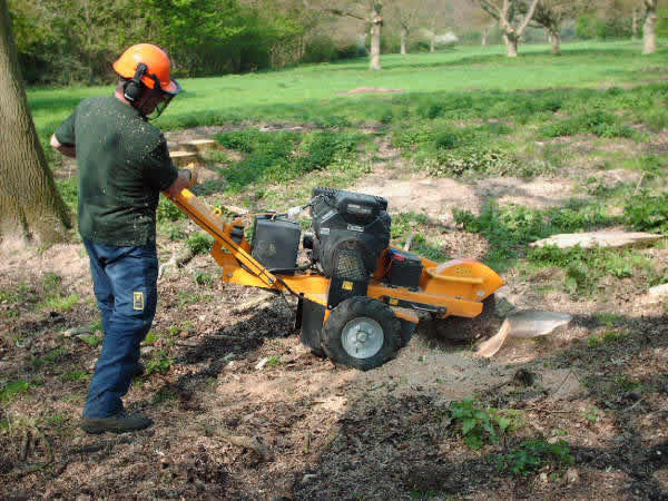 What To Know Before Choosing An Arborist?
