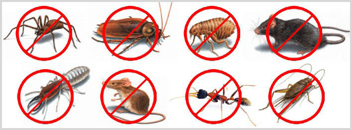 Professional Benefits Of Hiring A Pest Control Company